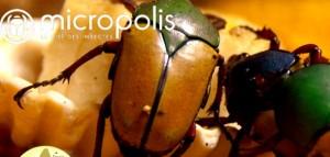 16 micropolis